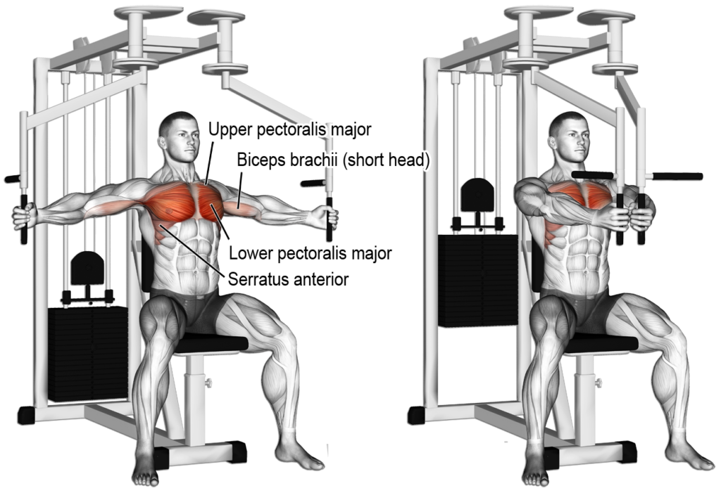 چگونه عضلات سینه حجیم و خوش فرمی داشته باشیم + 12 تمرین