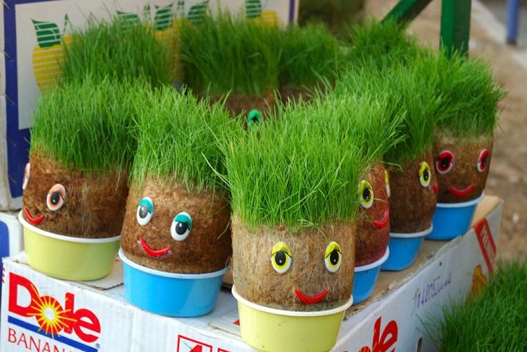 چگونه سبزه عید درست کنیم