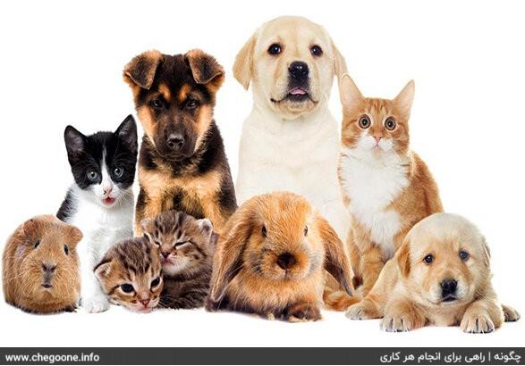 چگونه از حیوانات خانگی مراقبت کنیم و به آنها آموزش دهیم