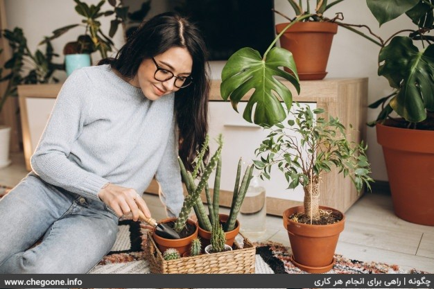 چگونه باغچه آپارتمانی زیبا و دل نشین داشته باشیم